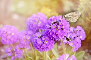 Flowers777869_960_7201